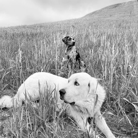 Raise your paw (or hand) if you're celebrating #NationalDogDay with your four legged friends. We personally don't know what we'd do without them   #PasoWineDogs #LGD #Herders #Protectors #BestFriends